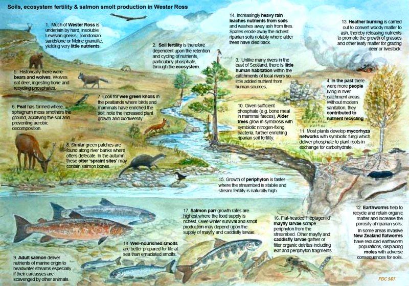 Wester Ross Fisheries Trust    Freshwater Habitats