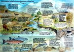 Soils, ecosystem fertility & salmon smolt production in Wester Ross [click to enlarge]
