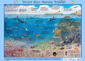 Wester Ross Marine Wildlife poster draft