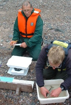 David Mullaney & Marcus Simpson counting sea lice on a sea trout by Kerry bay in July (WRFT)