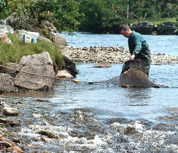 Alasdair Macdonald checking the fyke net in the Dundonnell River in July 2008.