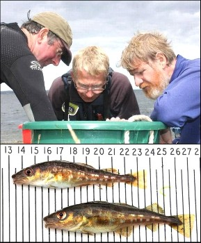 Peter Cunningham, David Mullaney and Roger McLachlan inspect the catch (photos by Ben Rushbrooke)