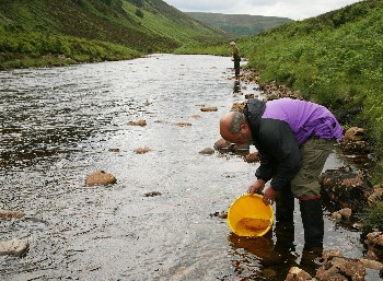 Stocking salmon fry of native origin into the River Bruachaig in June 2008 (photo by Roz Gordon).