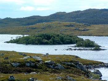 Trees provide shelter and can enhance the productivity of trout lochs and surrounding areas